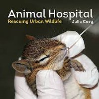 Animal Hospital: Rescuing Urban Wildlife by Coey, Julia
